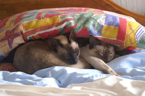 San-Yai and Simba